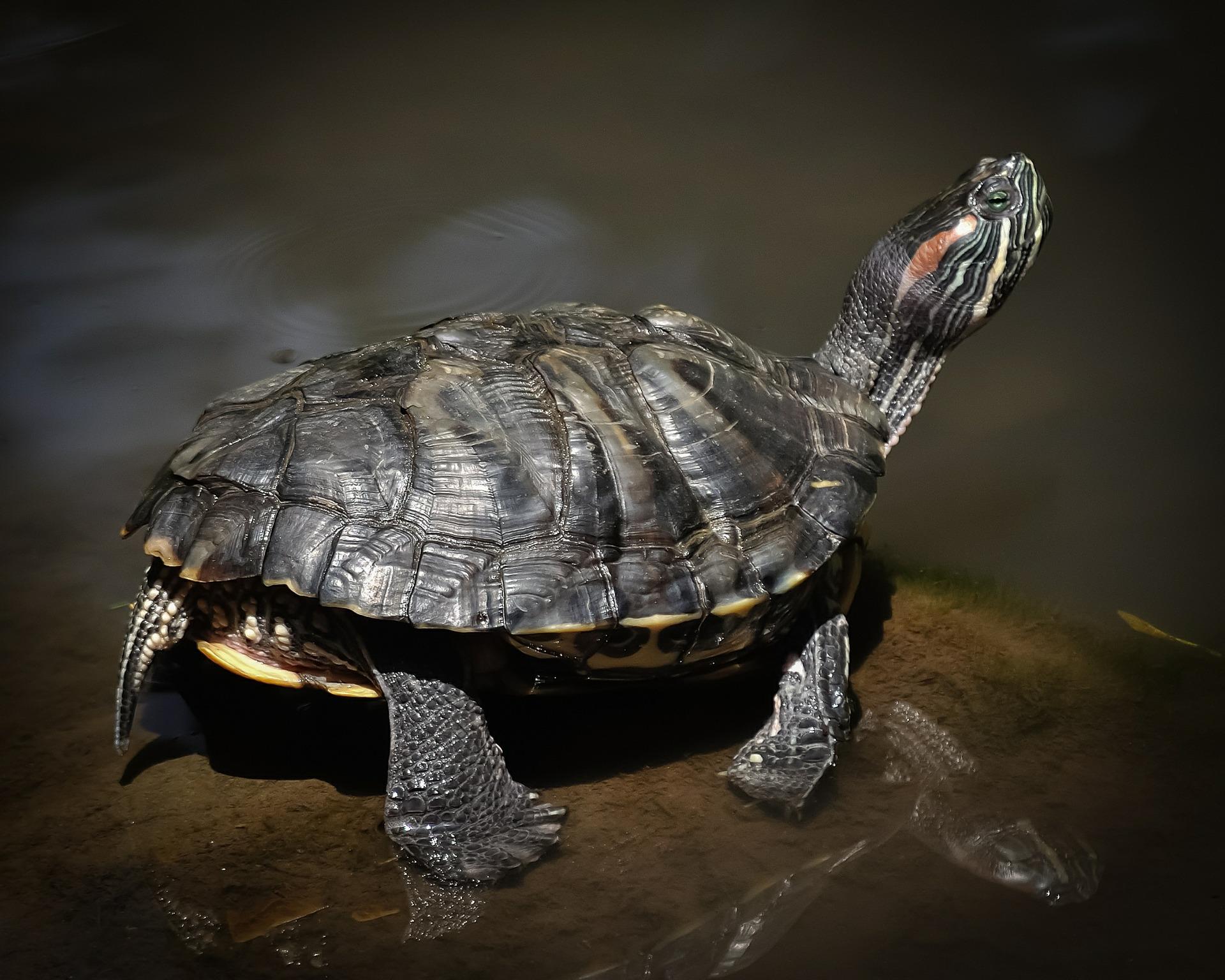 Perineum Fit: postura broaştei țestoase
