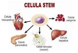 Celulele stem – pentru sănătatea copilului tău și a viitorului adult